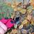 кустарник · работник · электрических · изолированный · белый · инструментом - Сток-фото © lianem