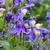 közelkép · fotó · tavasz · természet · szépség · növény - stock fotó © lianem
