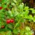 meyve · 10 · su · soyut · meyve · arka · plan - stok fotoğraf © lianem