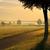 morning fog in a rular area stock photo © lianem