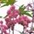 flor · jardim · folha · fundo · verde · fazenda - foto stock © lianem