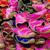 pattern · rosa · scarpe · acquerello - foto d'archivio © lianem
