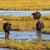 mocsár · keleti · Európa · tavasz · idő · víz - stock fotó © lianem