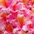 azalea · plant · landscaping · witte · bloemen · voorjaar · zomer - stockfoto © lianem