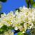 gruszka · kwiat · makro · widoku · białe · kwiaty · drzewo - zdjęcia stock © lianem