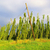 hop · veld · groeiend · hemel · patroon · landbouw - stockfoto © lianem