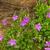 floreale · bella · primavera · abstract · natura · foglia - foto d'archivio © lianem