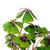 yonca · yalıtılmış · beyaz · yaprak · imzalamak · yeşil - stok fotoğraf © lianem