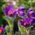 bocado · roxo · pormenor · verde · flor - foto stock © lianem