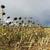 フィールド · 干ばつ · 詳細 · 地球 · 長い - ストックフォト © lianem