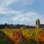 jesienią · parku · zielone · Hill · czerwony · pozostawia - zdjęcia stock © lianem