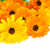 fleurs · isolé · sécher · blanche · feuille · été - photo stock © lianem