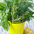 basilicum · gesneden · tuin · vers · voedsel · aarde - stockfoto © lidante