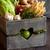édeskömény · kert · fény · sekély · mező · kép - stock fotó © lidante