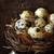 卵 · カラフル · 羽毛 · イースター · イースターエッグ · 明るい - ストックフォト © lidante