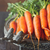 свежие · зрелый · морковь · изолированный · белый · продовольствие - Сток-фото © lidante