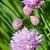 çiçeklenme · zaman · yaratıcı · pişirme · otlar - stok fotoğraf © lightkeeper