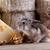 hamster · gıda · fotoğraf · karışık · kemirgen - stok fotoğraf © lightkeeper