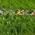 иллюзия · прогресс · развития · трава - Сток-фото © lightkeeper