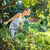 mooie · jonge · vrouw · tuinieren · tuin - stockfoto © lightpoet