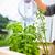 cozinha · ervas · mulher · jovem · água · doce - foto stock © lightpoet
