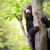 ヒグマ · 肖像 · 自然 · セット · 顔 - ストックフォト © lightpoet