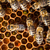 atış · arılar · çerçeve · çalışma · hayvan · tatlı - stok fotoğraf © lightpoet