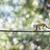 common squirrel monkey stock photo © lightpoet