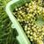 cultuur · wijnstokken · druiven · voedsel · natuur · bladeren - stockfoto © lightpoet