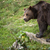 zwarte · beer · bos · lopen · boom · gras - stockfoto © lightpoet