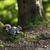 mały · wiewiórki · selektywne · focus · drzewo · szczęśliwy - zdjęcia stock © lightpoet
