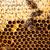 makro · atış · arılar · petek · bahçe · çerçeve - stok fotoğraf © lightpoet