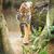 tijger · wonen · kat · natuur - stockfoto © lightpoet