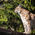рысь · глаза · лес · природы · кошки · снега - Сток-фото © lightpoet