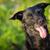 aanbiddelijk · golden · retriever · puppy · portret · baby · hond - stockfoto © lightpoet