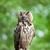 retrato · coruja · olhos · pássaro · pena · animais - foto stock © lightpoet