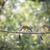 ağaç · sincap · ağaçlar · Botsvana · Afrika - stok fotoğraf © lightpoet