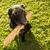 ветеринар · повязка · собаки · лапа · собака - Сток-фото © lightpoet