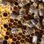 abelhas · completo · casa · grama · laranja - foto stock © lightpoet