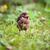 bébé · blackbird · nature · jardin · pays - photo stock © lightpoet