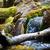 Eurasian otter (Lutra lutra) stock photo © lightpoet