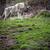 grayeurasian wolf canis lupus stock photo © lightpoet