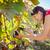 mulher · uvas · verdes · vinha · natureza · folha · verde - foto stock © lightpoet