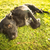 cute · chien · herbe · fin · après-midi · soleil - photo stock © lightpoet