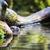 eurasian otter lutra lutra stock photo © lightpoet