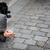 sokak · para · el · köpek · adam · tek · başına - stok fotoğraf © lightpoet