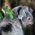 coala · árvore · arbusto · verde · cara · retrato - foto stock © lightpoet