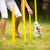 sevimli · küçük · köpek · matkap · çalışma - stok fotoğraf © lightpoet