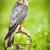 アメリカン · 屋外 · 鳥 · 自然 · エクアドル - ストックフォト © lightpoet
