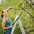 bastante · jardinería · color · negocios · flor - foto stock © lightpoet